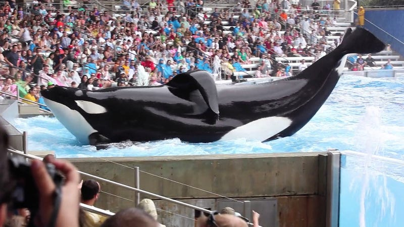 Illustration for article titled The Creators Of 'Blackfish' Are Releasing A New Documentary About How, On Second Thought, SeaWorld Doesn't Make Sense Without Whales