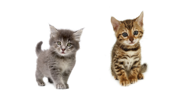 Illustration for article titled Uber Celebrates National Cat Day By Delivering Kittens to Your Door