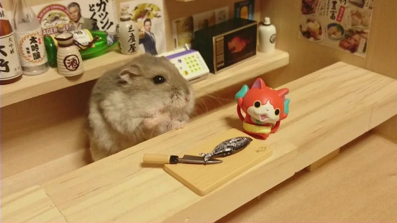 Hamster Bartenders Are The Best Bartenders - Hamster bartenders cutest thing youve ever seen