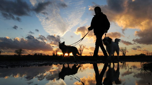 For the Love of Dogs, Make Daylight Saving Time Permanent Everywhere