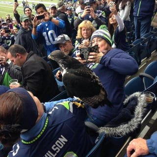 Illustration for article titled Seahawks Mascot Decides To Hang Out With Fans In The Stands