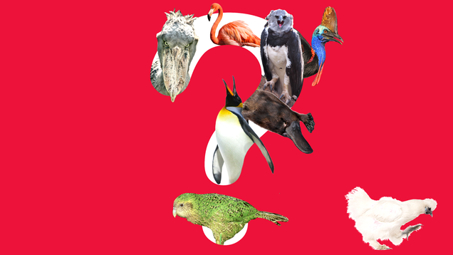 There Are 5 Good Birds—But Which 5?