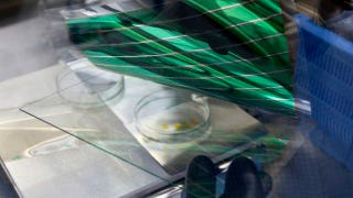 Illustration for article titled Flexible Solar Panels Stack Cells on Sheets Printed Like OLEDs