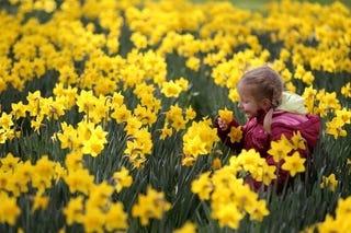 Illustration for article titled April Flowers