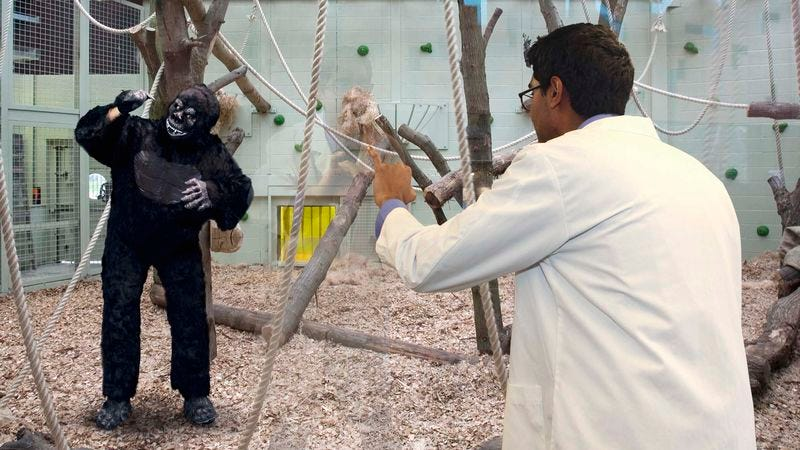 Brian, a full-grown, adult gorilla-suit-wearing man, communicates with a researcher.