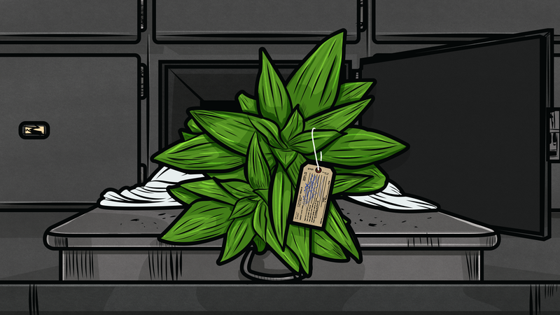 Illustration for article titled How to Tell If Your Plant Is Dead or Just Dormant