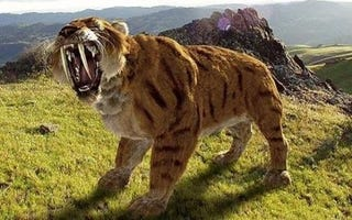 Illustration for article titled Saber-toothed tigers' secret weapon