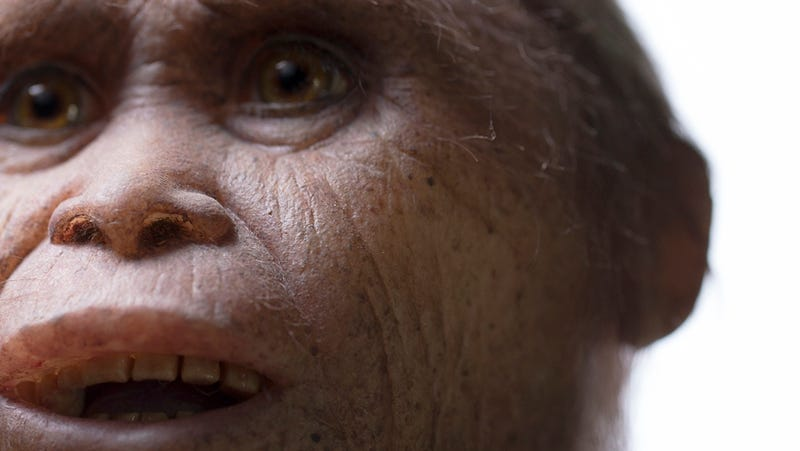 Illustration for article titled Ancestral Remains of Mysterious 'Hobbit' Species Uncovered on Indonesian Island
