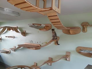 Illustration for article titled This wall furniture is the coolest thing your cat will see all day