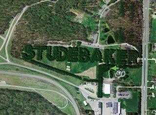 Illustration for article titled Studebaker Pines Still Standing!