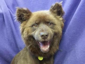 Dog Up For Adoption Named Grizzly