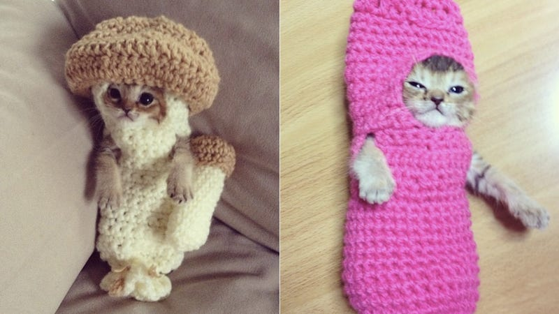 Illustration for article titled Your Morning Cry: Injured Kitten's Life Was Saved By Crocheted Rehab