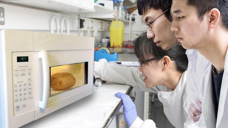 North Korean scientists microwaving a potato.