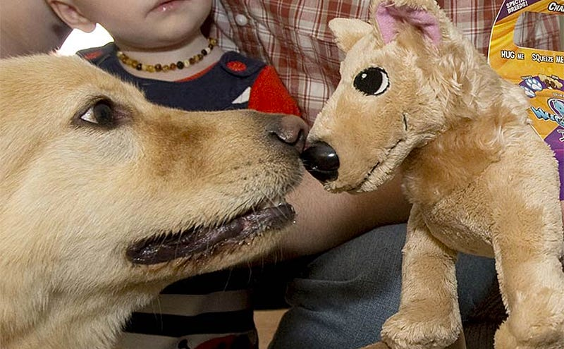 Illustration for article titled This Site Will Turn Your Rescue Dog Into a Free Plush Toy, If You're Lucky