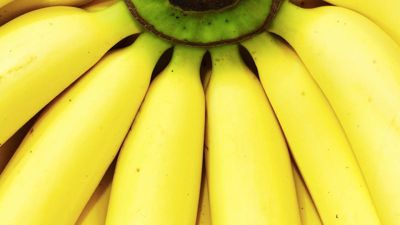 Illustration for article titled Bananas have been hopelessly inbred clones for the last 7,000 years