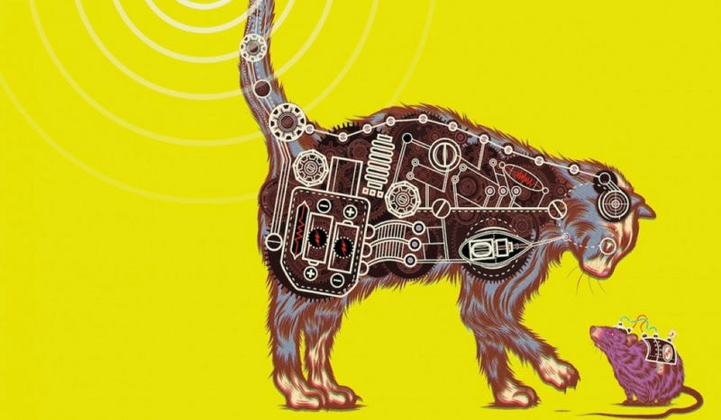 Illustration for article titled The CIA's secret experiments to turn cats into spies