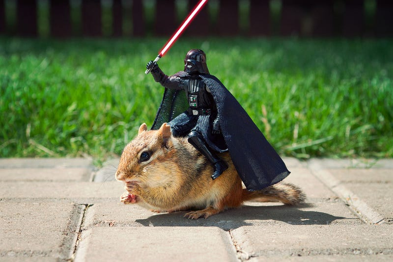 Illustration for article titled This Is How You Trick a Chipmunk Into Posing With Darth Vader