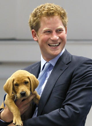 Illustration for article titled Prince Harry & Puppy Will Make Your Mind Explode