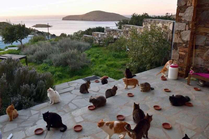 Illustration for article titled Esta paradisíaca isla griega ofrece sueldo y casa con vistas al mar a cambio de cuidar a 55 gatos