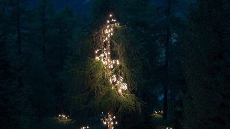 Illustration for article titled Illuminated Lamps Cascade Up a Huge Swiss Pine Tree