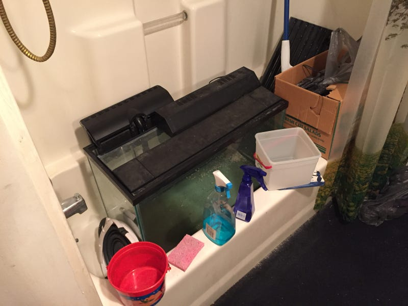 Cleaning a fish tank for Cleaning fish tank with vinegar