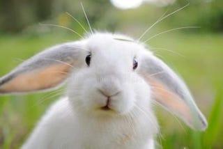 Illustration for article titled White Rabbits