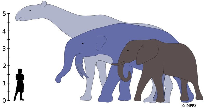 Illustration for article titled Why did mammals evolve to enormous sizes - then get smaller again?