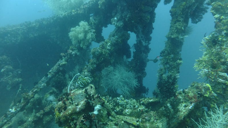 """A """"Rice Bowl Wreck"""" prior to illegal salvaging. (Image: Jason Fowler/Flickr)"""