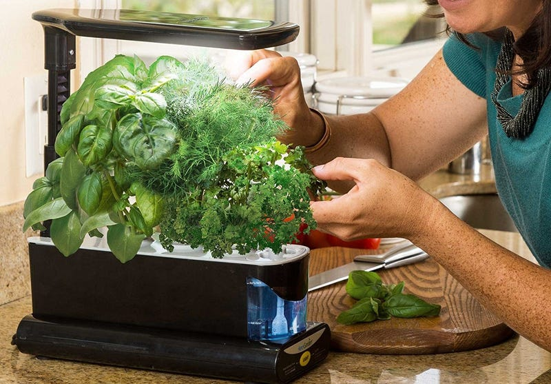 AeroGarden Sprout LED with Gourmet Herb Seed Pod Kit | $50 | Amazon