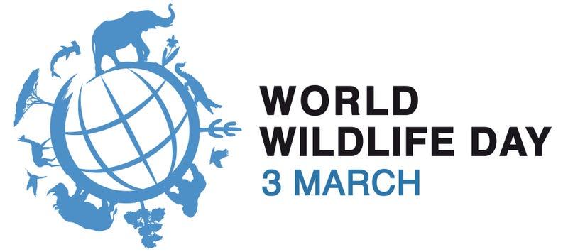 Illustration for article titled World Wildlife Day: Education and Celebration!