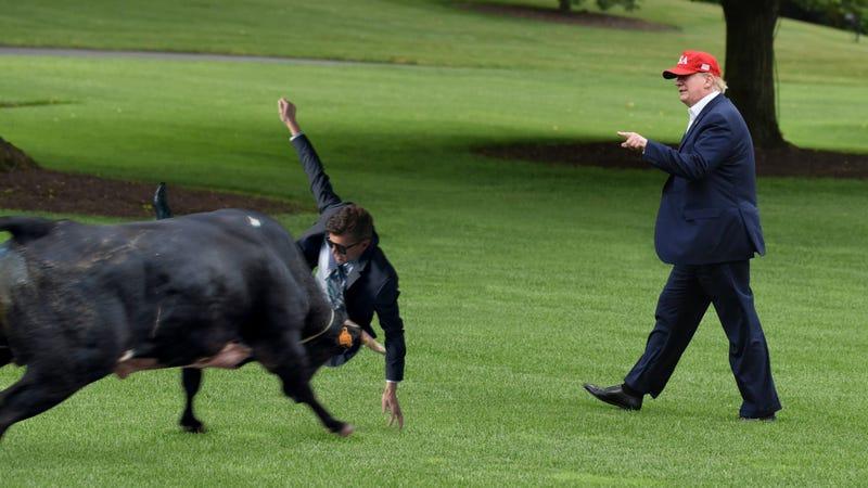 Heroic Secret Service Agent Takes Bull Intended For President