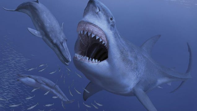 The World s Largest Shark Had a Fatal Appetite For Dwarf Whales