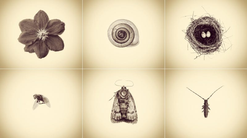 Illustration for article titled Only an iPhone Was Used to Create This Archive of Backyard Wildlife