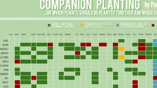 Illustration for article titled This Chart Shows Which Plants Grow Well Together (and Which Don't)
