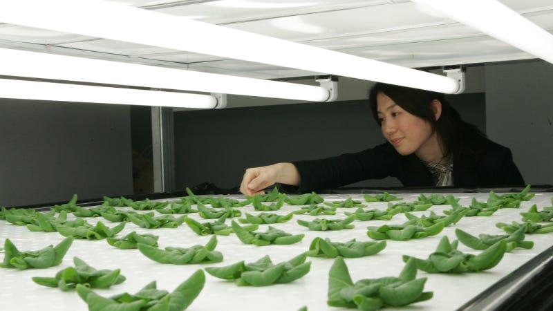 14 High-Tech Farms Where Veggies Grow Indoors