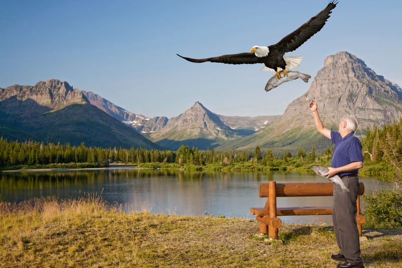 Illustration for article titled Elderly Man Spends Quiet Afternoon In National Park Feeding Trout To Eagles