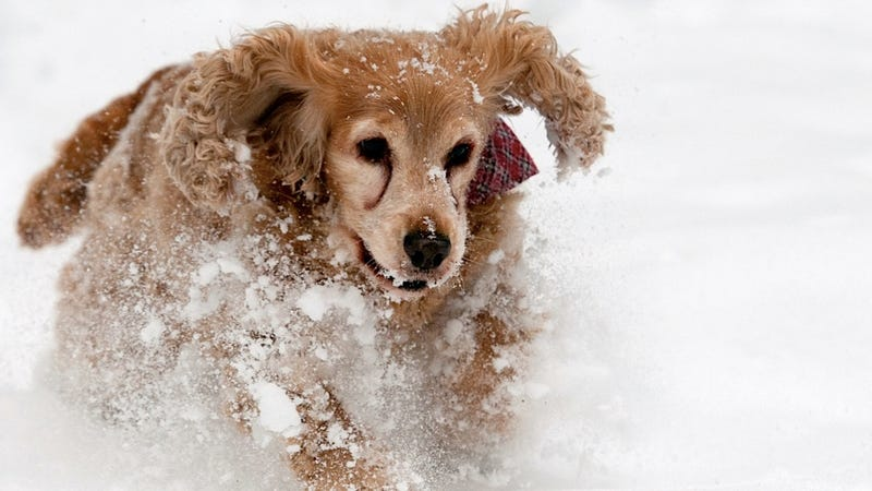 Illustration for article titled The Most Fun You'll Ever Have with Snow Is Staring at This Dog's Snow Romp