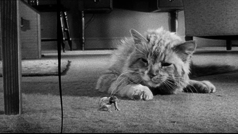 Image result for shrinking man