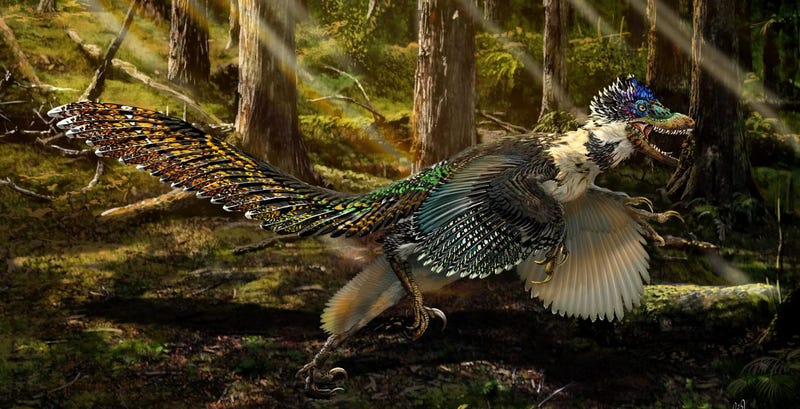 Illustration for article titled Velociraptor's Feathered Cousin Is the Stuff of Drug-Infused Nightmares