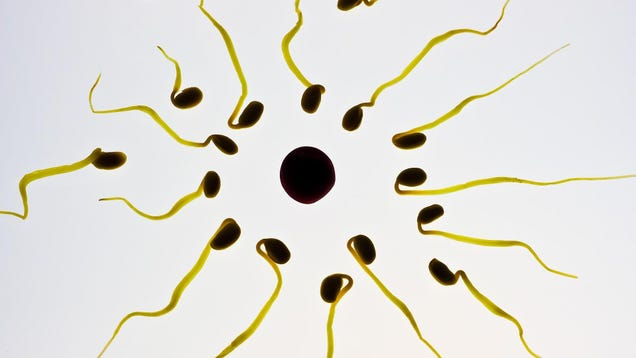 A Major Study on How Sperm Move Has Been Retracted