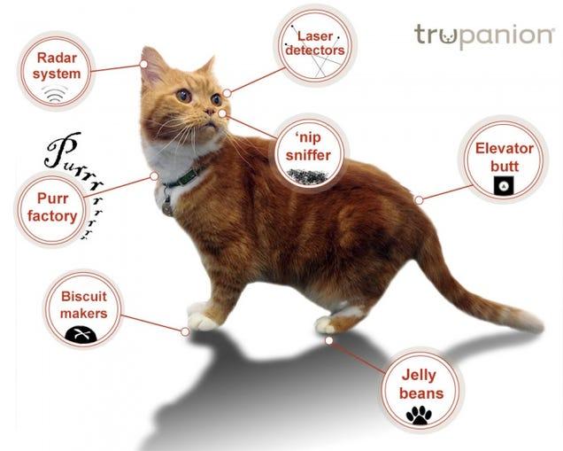 La anatomía de un gato ...