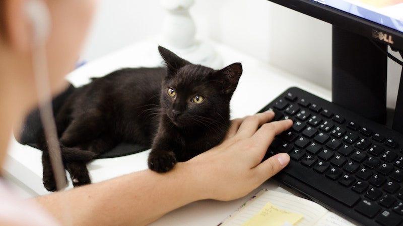 Los gatos pueden vomitar en los momentos y los lugares más inoportunos. El streamer JadedBlue ha aprendido esta difícil lección.