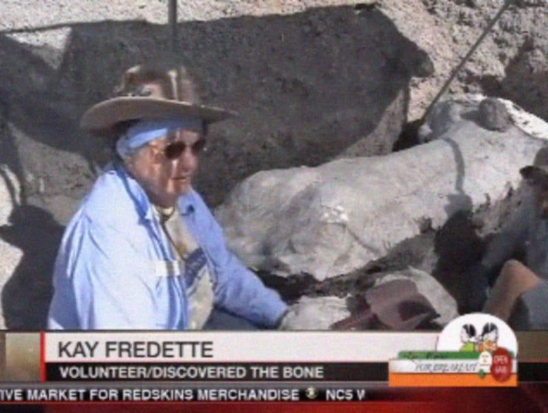 Illustration for article titled Dinosaur Dig Volunteer Makes a Big Find