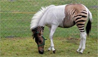 Illustration for article titled Ten Strange Animal Hybrids