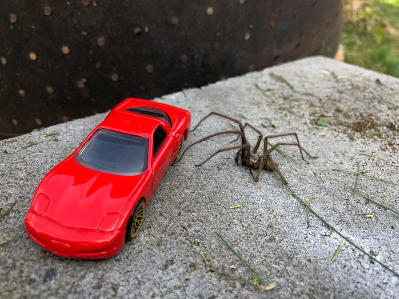 Illustration for article titled 97 Corvette Spider