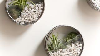 Make Your Own Miniature Terrarium Magnets
