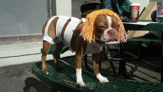 Illustration for article titled Doggy Leeloo might be the greatest Fifth Element cosplay ever