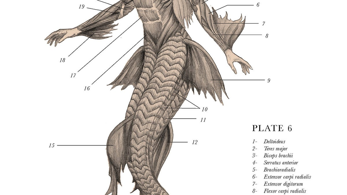 Mythological creatures are cooler when they\'re anatomically correct