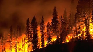 Illustration for article titled Why America Has Stronger Forest Fires Than Elsewhere In The World