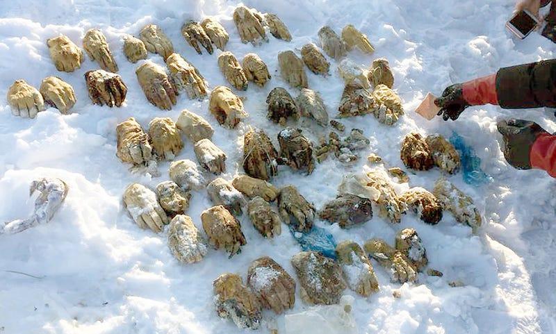Illustration for article titled Rusia investiga la aparición de 54 manos humanas encontradas en una pequeña isla de Siberia